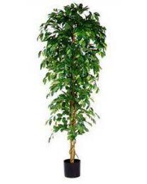 Kunstplant Ficus Benjamina, 210 cm, excl. sierpot