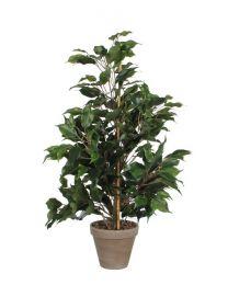 Kunstplant Ficus Exotica, 65 cm, excl. sierpot