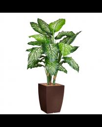 Kunstplant Dieffenbachia in sierpot Genesis vierkant - H140