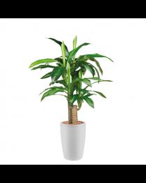 Kunstplant Dracaena Fragans in sierpot Genesis rond - H120