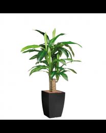 Kunstplant Dracaena Fragans in sierpot Genesis vierkant - H120