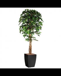 Kunstplant Ficus in sierpot Genesis vierkant - H210