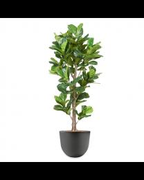 Kunstplant Ficus Lyrata in sierpot Eggy - H200