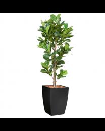 Kunstplant Ficus Lyrata in sierpot Genesis vierkant - H230