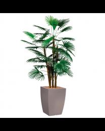 Kunstplant Rhapis Palm in sierpot Genesis vierkant - H150