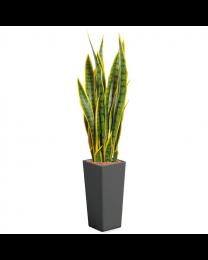 Kunstplant Sansevieria in sierpot Clou vierkant - H115