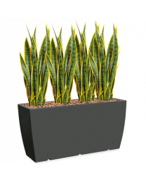Kunstplant Sansevieria in sierpot Genesis Cassetta - H110